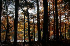 Herbstwald am Rhein