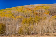 Herbstwald am Scenic Byway 12, Utah, USA