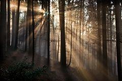 Herbstwald an der Nebelobergrenze
