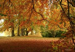 Herbstwald auf der Mainau