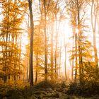 Herbstwald bei Hösel