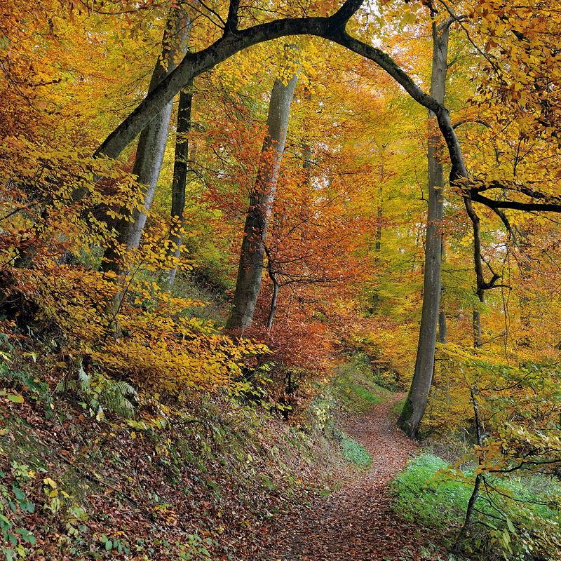 *Herbstwald*