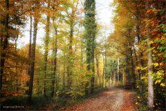 Herbstwald ..