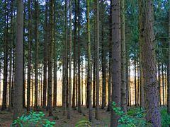 """"""" Herbstwald """""""