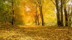 Herbst:Wald