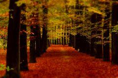 Herbstwald en miniature