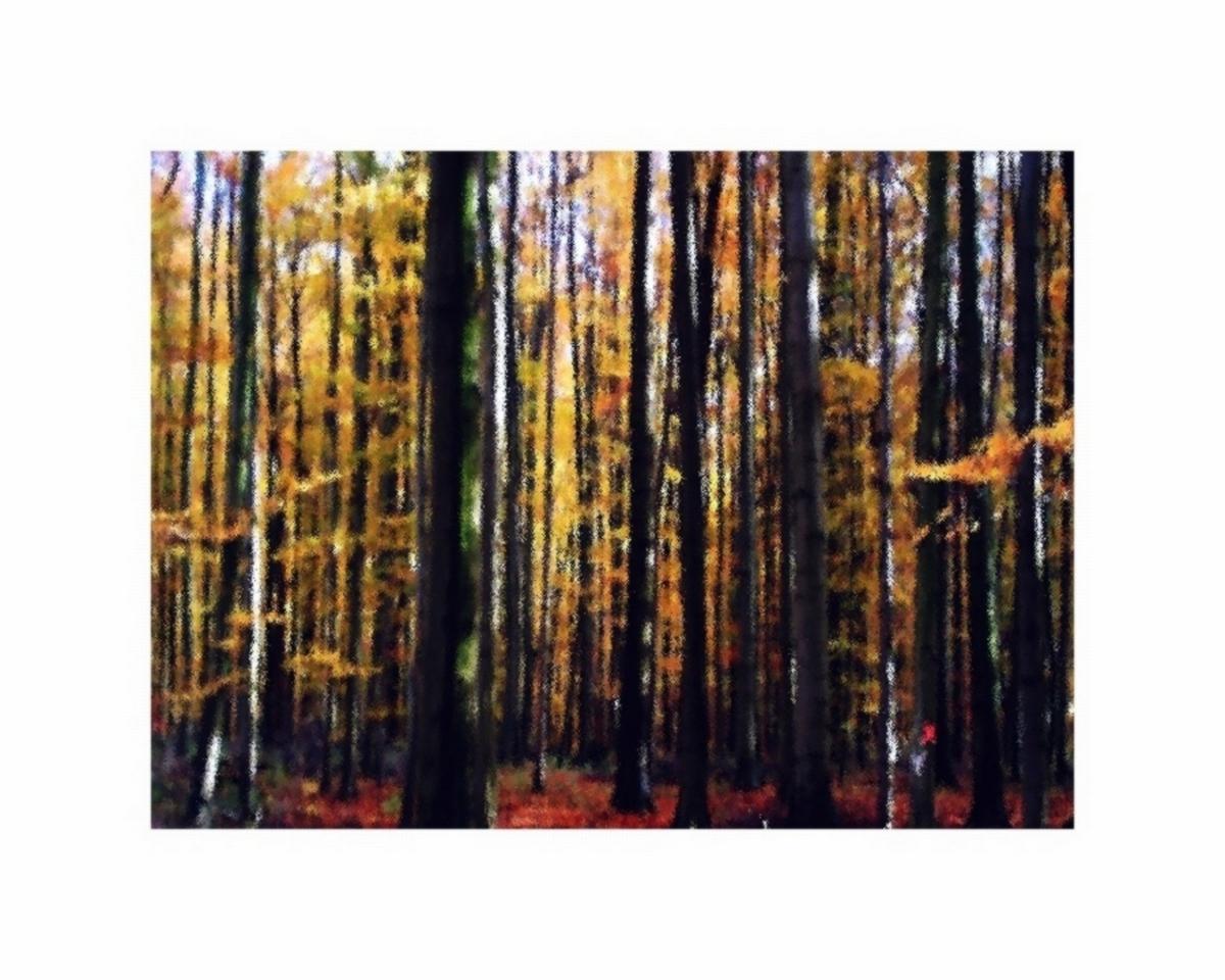 Herbstwald-   erinnerung