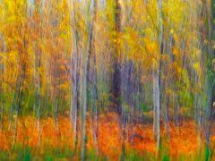 *** Herbstwald ***