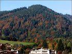 """""""Herbstwald"""""""
