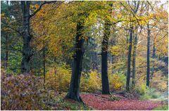 Herbstwald Heeder Tannen