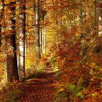 Herbstwald II