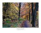 Herbstwald im Benther Berg