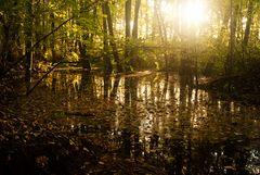 Herbstwald im Gegenlicht