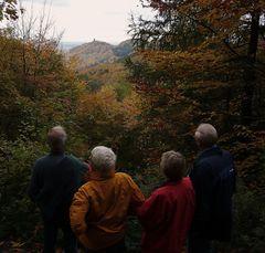 Herbstwald im Siebengegirge ...