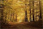 Herbstwald im Taunus