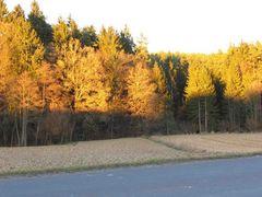 Herbstwald in der Abendsonne