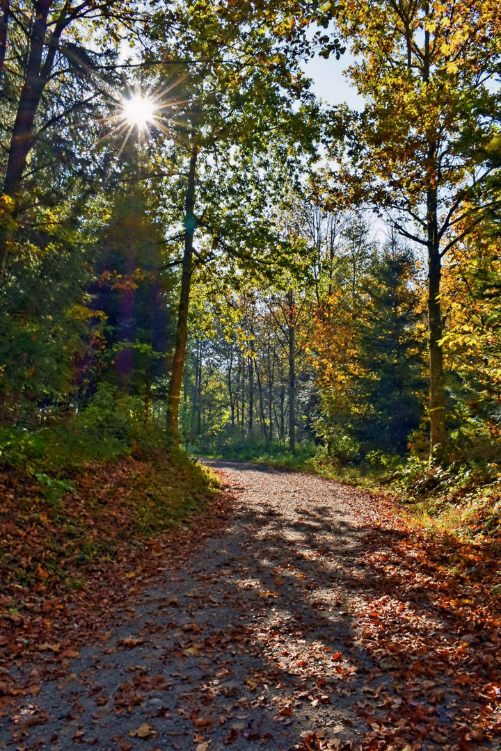 Herbstwald in Pfäffikon