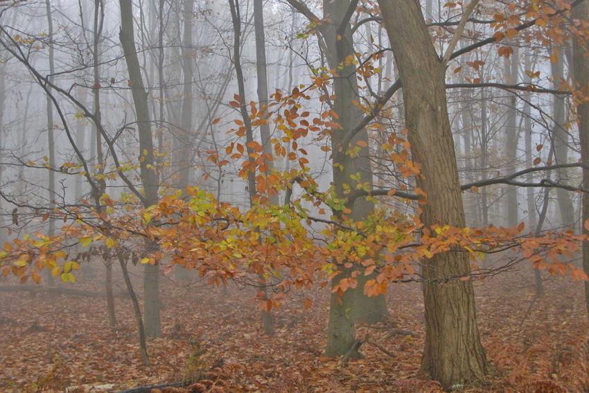 Herbstwald Lauersfort