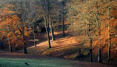 Herbstwald mit Reh (1)