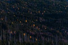 Herbstwald oder...