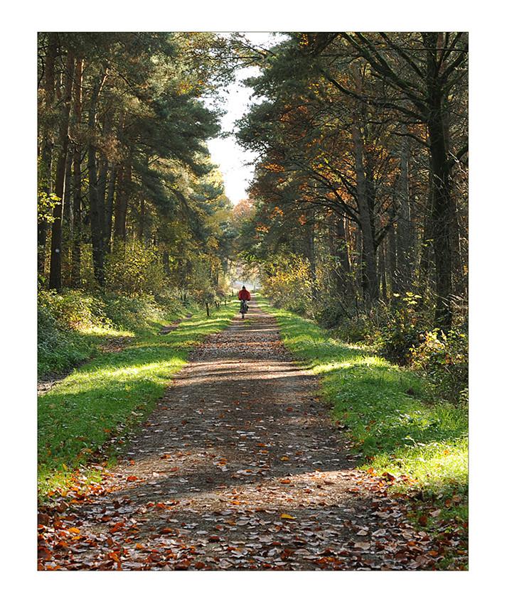 Herbstwaldallee