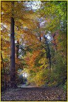 Herbstwaldeingang