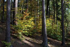 Herbstwaldimpression bei Sonnenschein