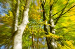 Herbstwaldkathedrale 1
