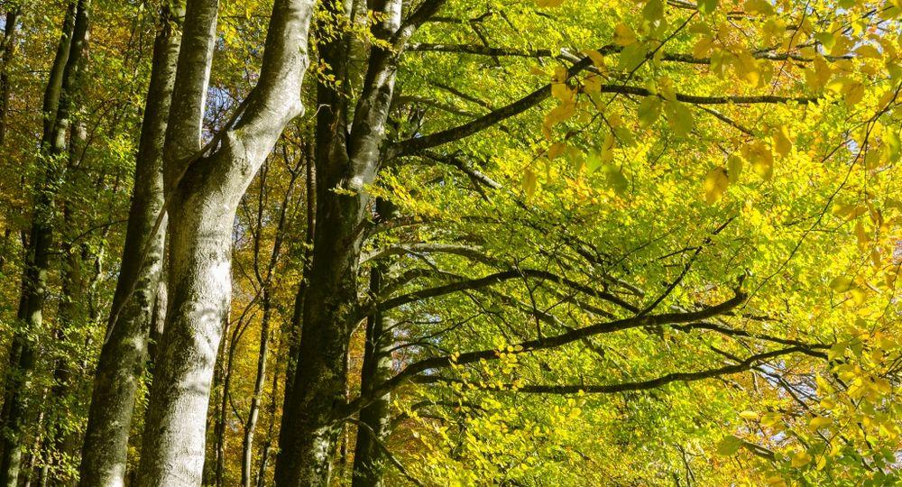 Herbstwaldkathedrale 2
