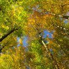 Herbstwaldkathedrale 3