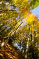 Herbstwaldkathedrale 4