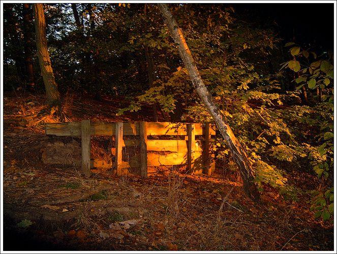 Herbstwaldlicht