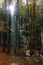 Herbstwald_Regen