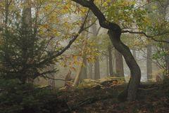 Herbstwaldstimmung