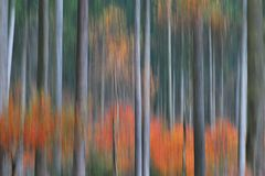Herbstwaldwischer