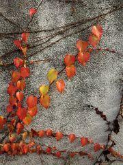 Herbstwand