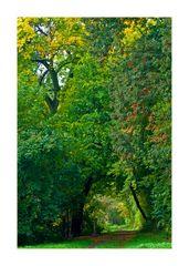 Herbstwanderung auf dem Kühkopf Nr. 1