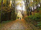 Herbstwanderung in der Eifel