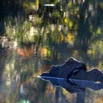 Herbstwasser