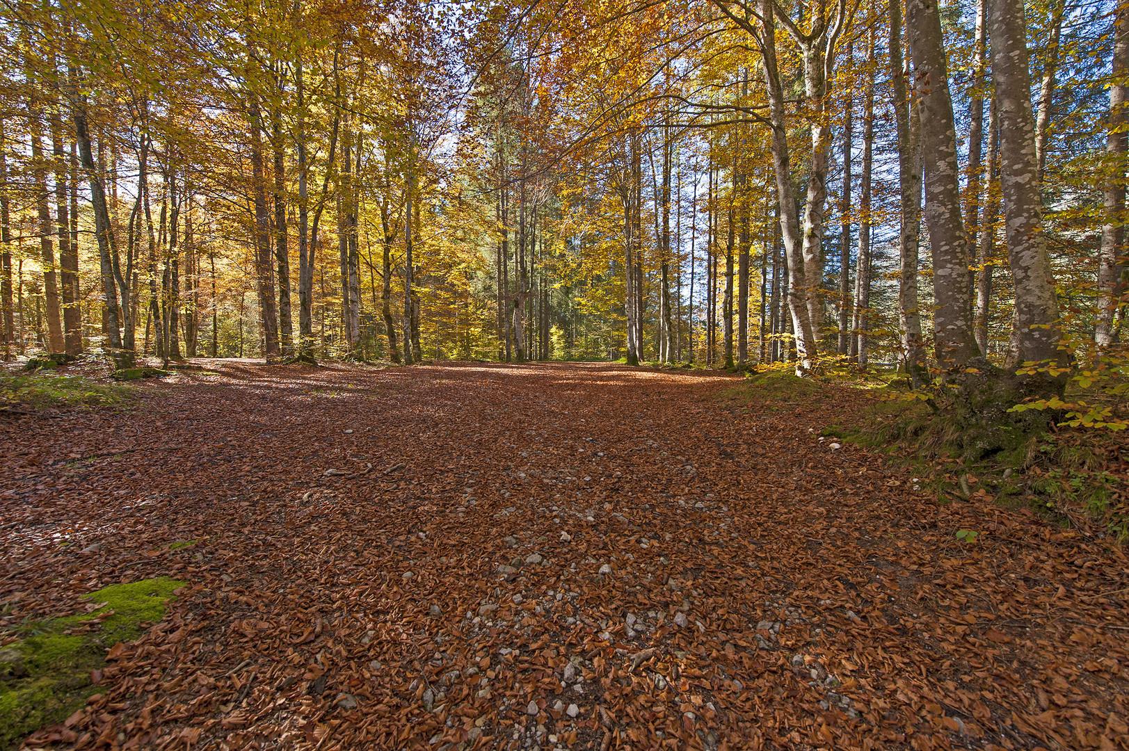 Herbstwege