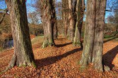 Herbstwege - 3