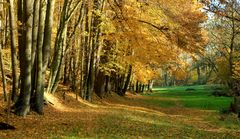 Herbstwege (6)