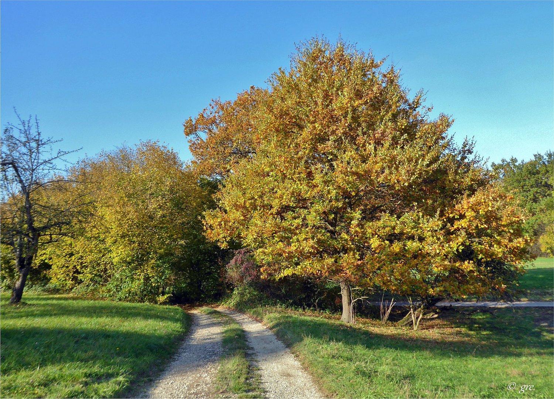 Herbstwege...