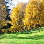 Herbstweide am Krankenhaus Wangen