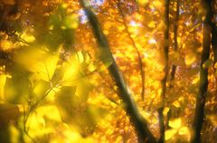 Herbstwind....
