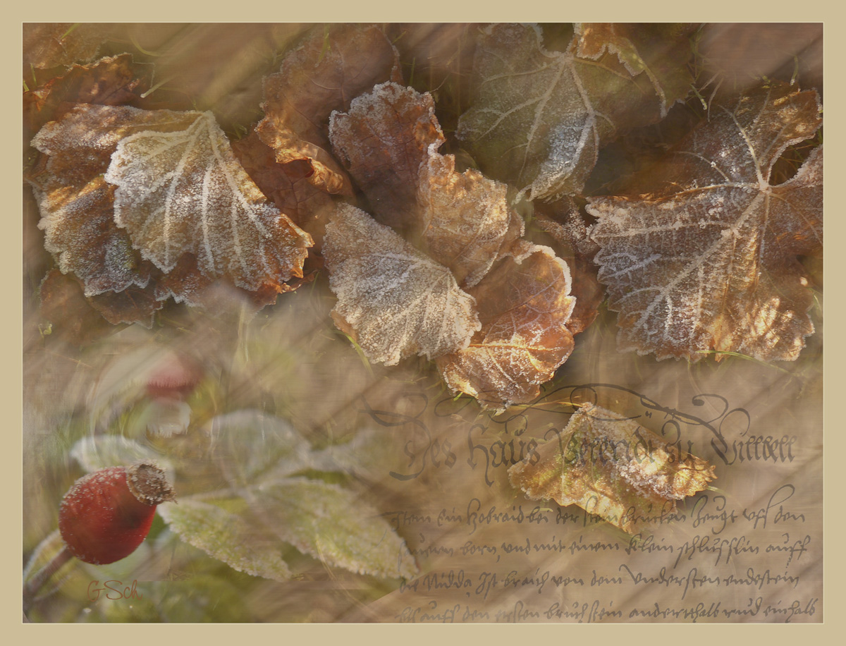 Herbstwind ....