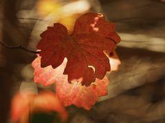 Herbst.Wind.Licht.