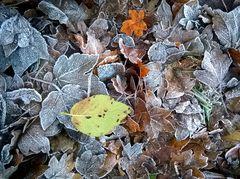 *** Herbstwinter ***