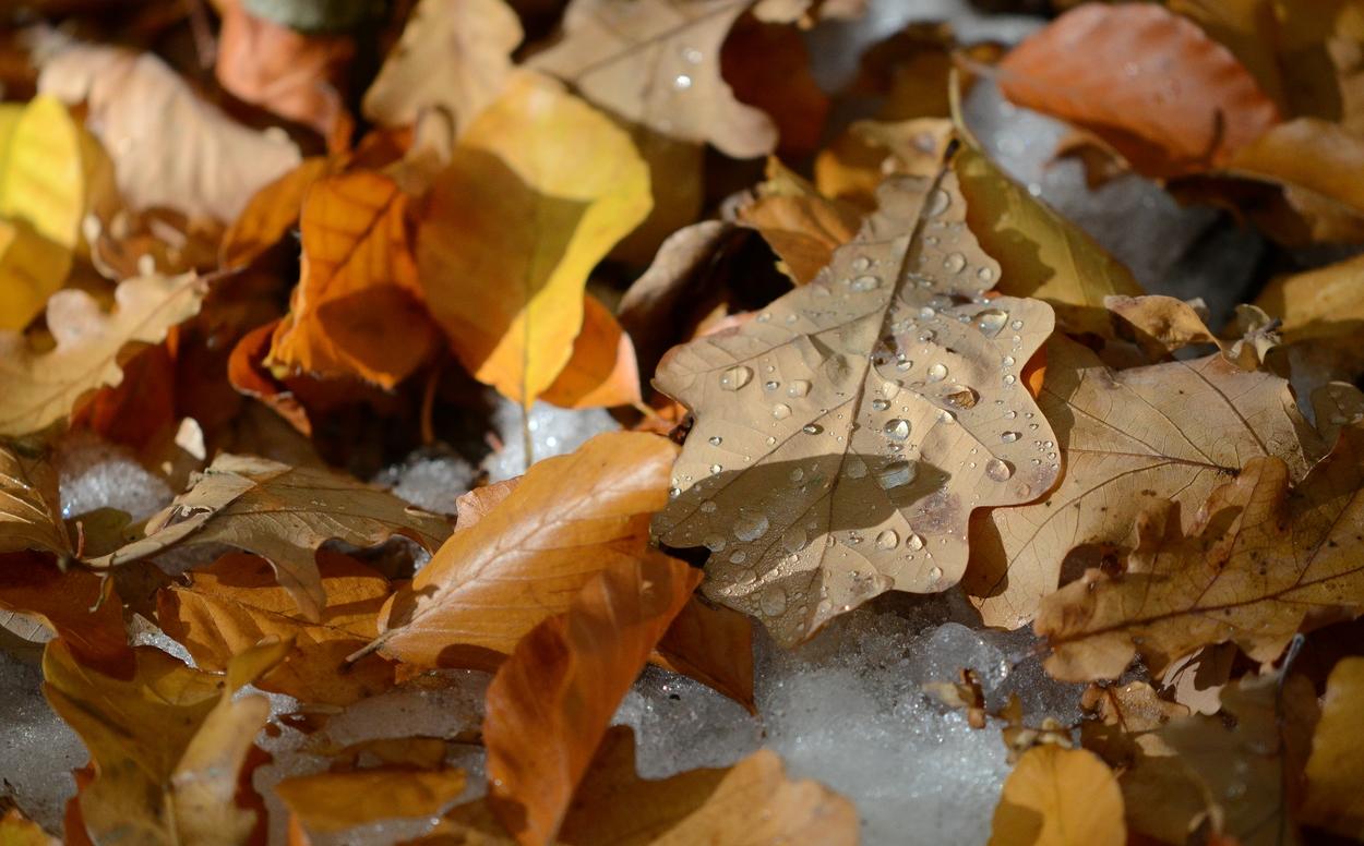 Herbst Winter Intermezzo Foto Bild Jahreszeiten Herbst