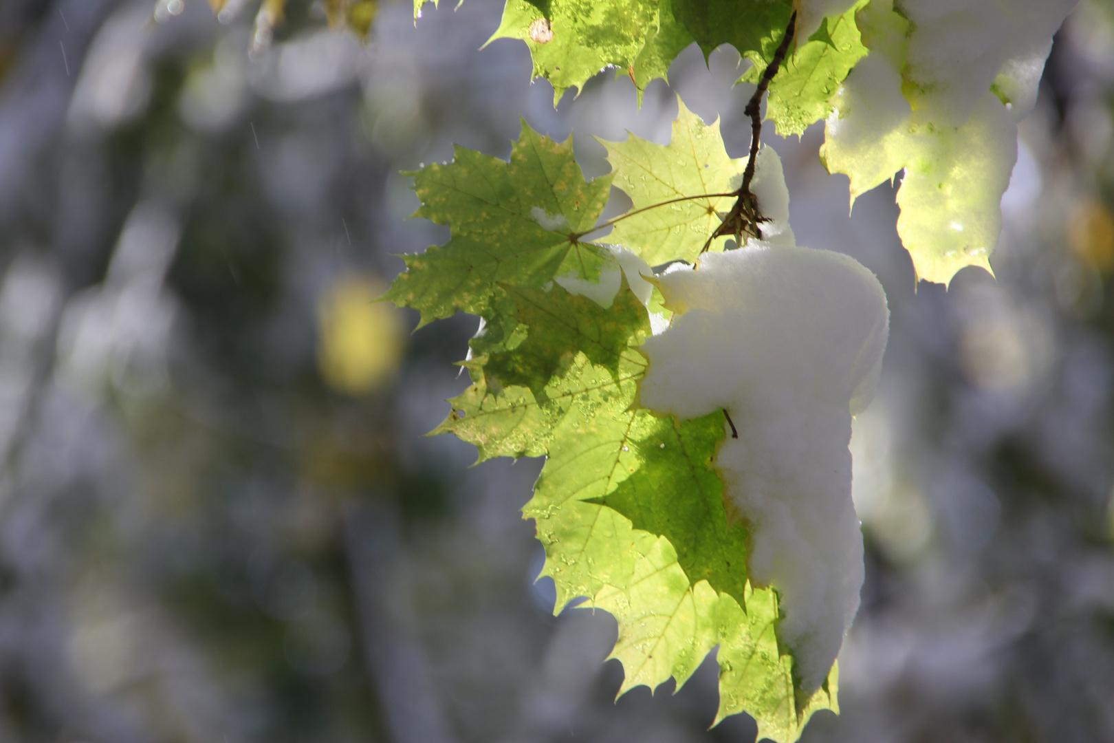 Herbst...Winter...Herbst 2